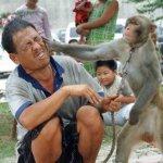 monkey-slap